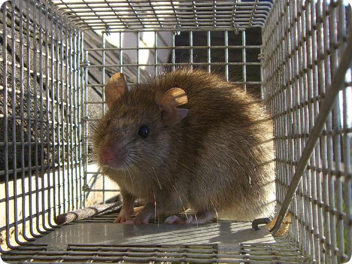 Squirrel Removal For Miami Florida 1 786 245 0391